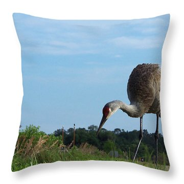 Sandhill Crane 018 Throw Pillow