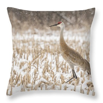 Sandhill Crane 2016-3 Throw Pillow