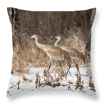 Throw Pillow featuring the photograph Sandhill Crane 2016-4 by Thomas Young