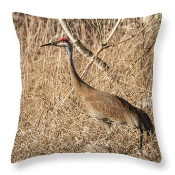 Throw Pillow featuring the photograph Sandhill Crane 2016-7 by Thomas Young