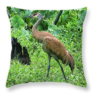 Sandhill Crane At Sandy Ridge Reservation Throw Pillow