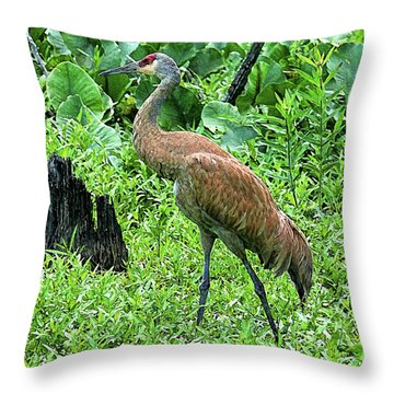 Sandhill Crane At Sandy Ridge Reservation Throw Pillow