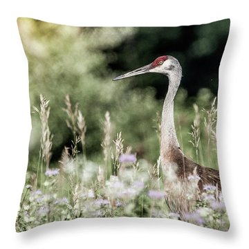 Sandhill Crane Throw Pillow by Cathy Cooley