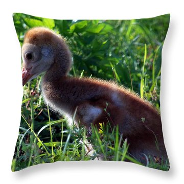 Sandhill Crane Chick 087  Throw Pillow by Chris Mercer
