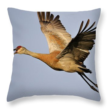 Sandhill Crane In Flight Throw Pillow