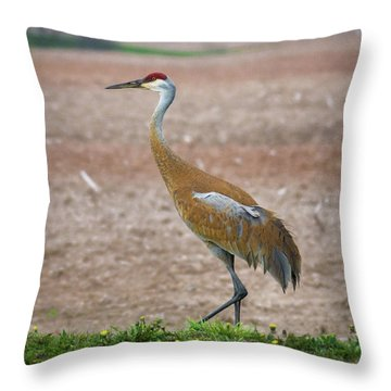 Throw Pillow featuring the photograph Sandhill Crane In Profile by Bill Pevlor