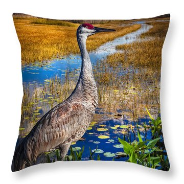 Sandhill Crane In The Glades Throw Pillow