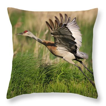 Sandhill Crane Lift Off Throw Pillow