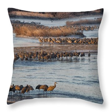 Sandhill Crane Platte River  Throw Pillow