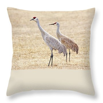 Throw Pillow featuring the photograph Sandhill Cranes Of Montana by Jennie Marie Schell