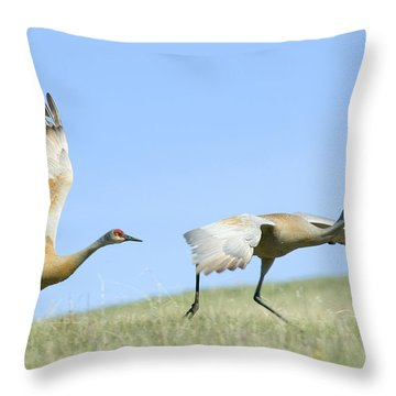 Sandhill Cranes Taking Flight Throw Pillow