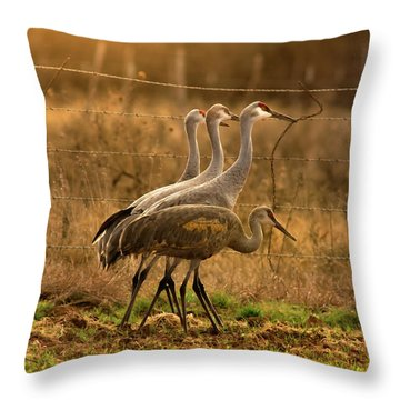 Throw Pillow featuring the photograph Sandhill Cranes Texas Fence-line by Robert Frederick