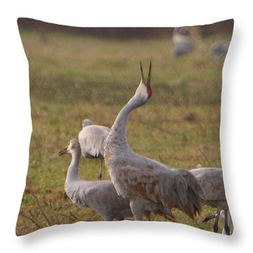 Throw Pillow featuring the photograph Sandhill Delight by Shari Jardina