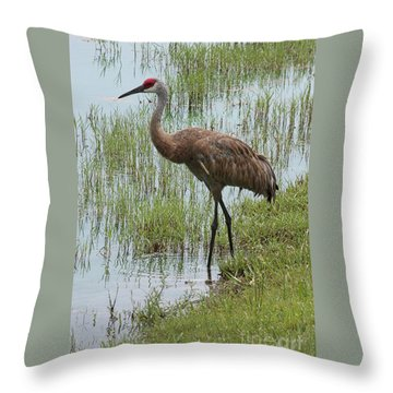 Sandhill In The Marsh Throw Pillow by Carol Groenen