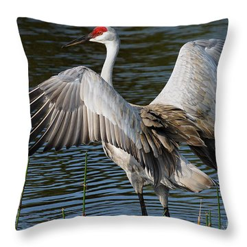 Sandhill Crane Wingstretch Throw Pillow