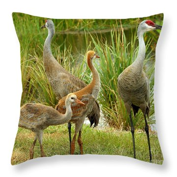 Sandhills On Alert At 9 Weeks Throw Pillow by Larry Nieland