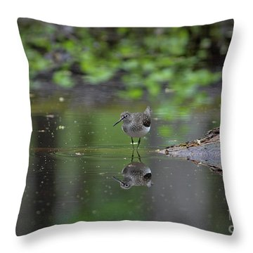 Throw Pillow featuring the photograph Sandpiper In The Smokies by Douglas Stucky