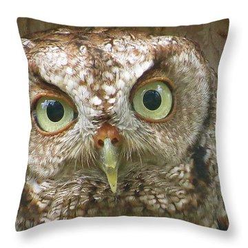 Sanibel Screech Owl 2 Aka Throw Pillow