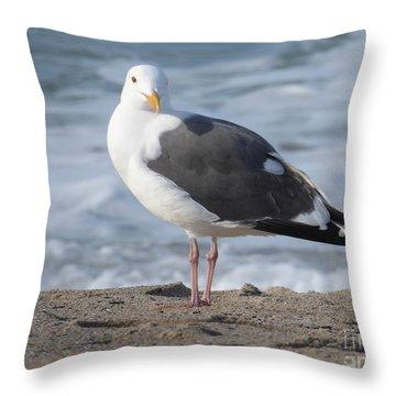 Santa Monica Seagull Throw Pillow by Margaret Brooks