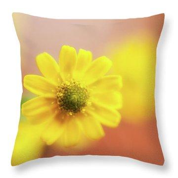 Sanvitalia  Throw Pillow by Wayne Molyneux