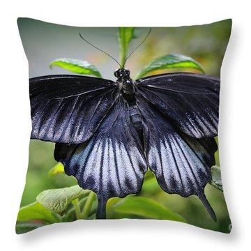 Sapphire Blue Swallowtail Butterfly Throw Pillow