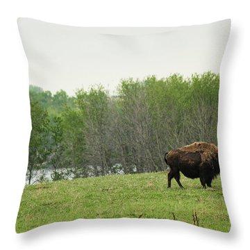 Saskatchewan Buffalo Throw Pillow