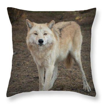 Sassy Wolf Throw Pillow