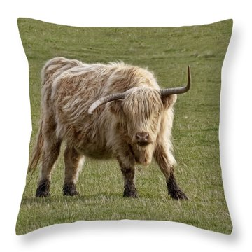 Sauvie Island Cow Throw Pillow