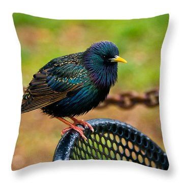 Saving A Seat Throw Pillow by Christopher Holmes