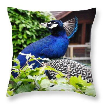 Temple Peacock Throw Pillow