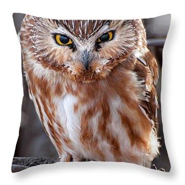 Saw-whet Owl Throw Pillow