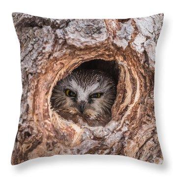 Saw-whet Secret Throw Pillow