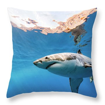 Saying Hello Throw Pillow by Shane Linke