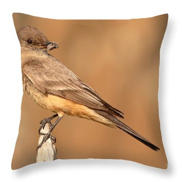 Say's Phoebe Looking Back With Insect Grasped In Beak Throw Pillow by Max Allen