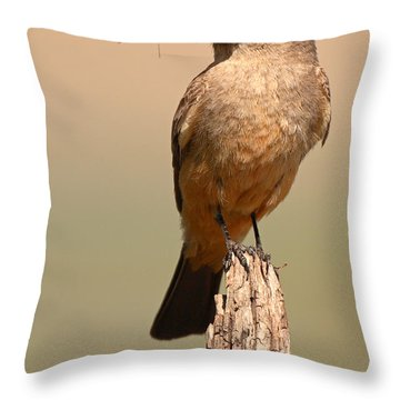 Say's Phoebe On Perch With Grasshopper In Beak Throw Pillow by Max Allen
