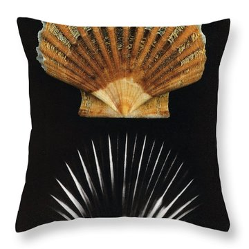 Scallop Shell X-ray Throw Pillow by Photo Researchers