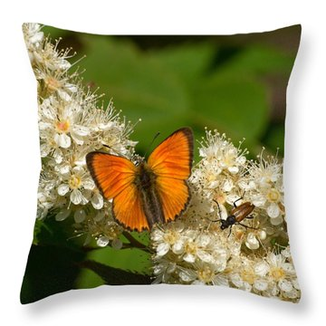 Throw Pillow featuring the photograph Scarce Copper 2 by Jouko Lehto