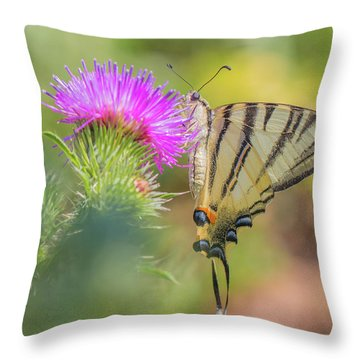 Scarce Swallowtail - Iphiclides Podalirius Throw Pillow