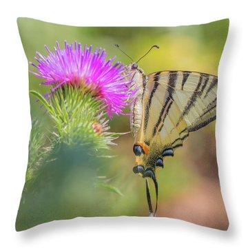 Scarce Swallowtail - Iphiclides Podalirius Throw Pillow