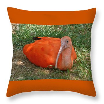 Scarlet Ibis Youth Throw Pillow