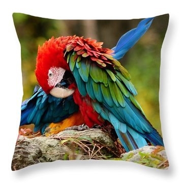 Scarlet Macaw Throw Pillow by Elaine Manley