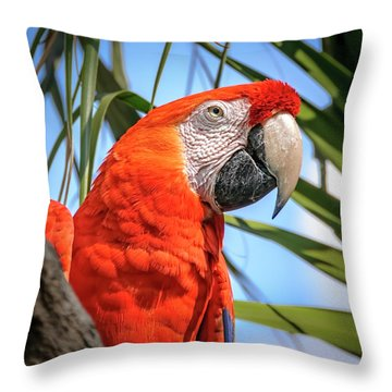 Throw Pillow featuring the photograph Scarlet Macaw by Steven Sparks