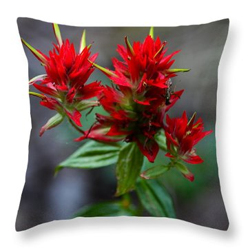 Scarlet Red Indian Paintbrush Throw Pillow