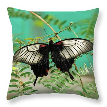 Throw Pillow featuring the photograph Scarlet Swallowtail Butterfly -2 by Paul Gulliver
