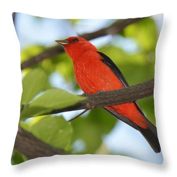 Scarlet Tanager Throw Pillow by Alan Lenk
