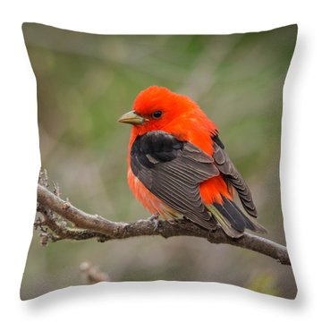Scarlet Tanager On Branch Throw Pillow