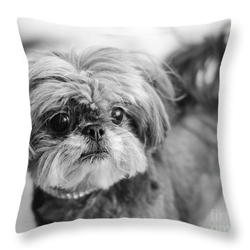 Scarlett B And W Throw Pillow