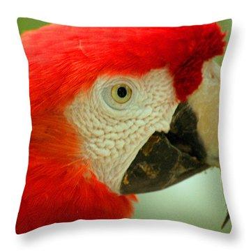 Scarlett Macaw South America Throw Pillow