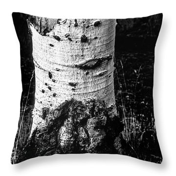 Scarred Old Aspen Tree Trunk In Colorado Forest Throw Pillow