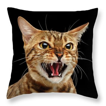 Throw Pillow featuring the photograph Scary Hissing Bengal Cat On Black Background by Sergey Taran